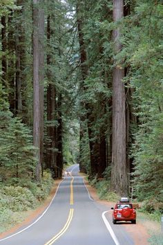 Avenue of the Giants - Humboldt County CA