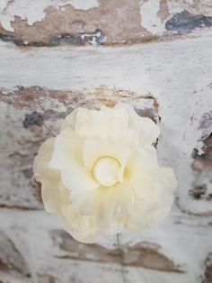 Cream flower