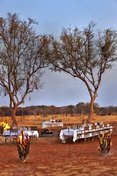 A pair of award-winning lodges in the heart of malaria-free Madikwe Game Reserve, imbued with the spirit of their colourful and innovative creators, Jaci and Jan Safari Wedding, Bush Wedding, Private Games, Wildlife Park, Paradise On Earth, Game Reserve, African Safari, Lodges, Beautiful Beaches