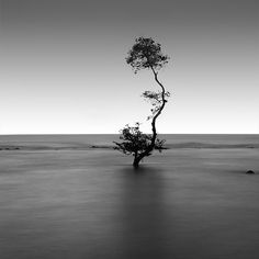 Black and White by Chaerul-Umam. Collection of beautiful black and white photography by Chaerul Umam, a photographer based in Serang, Indonesia. Chaerul specializes in landscape photography, but as you may see below, he does still life and portraits as well. (via http://www.cruzine.com/2013/04/30/black-white-chaerulumam/ )