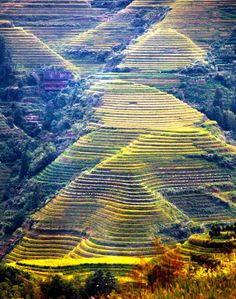 Scenery of terraced fields in Longsheng, China's Guangxi - People's Daily Online