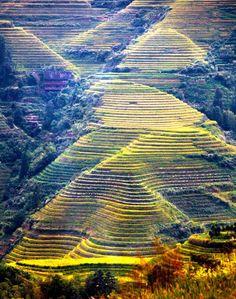 Scenery of terraced fields in Longsheng, China's Guangxi - People's Daily Online