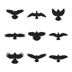 Flying bird like eagle sparrow dove pigeon sea gull or hawk silhouettes set Hawk Silhouette, Bird Silhouette Tattoos, Flying Bird Silhouette, Animal Silhouette, Kleiner Adler Tattoo, Hawk Tattoo, Tattoo Bird, Small Eagle Tattoo, Red Bird Tattoos