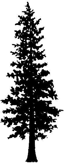 western hemlock tree silhouette tattoo - Google Search