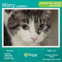 Misty (A808841) may be 10 years old, but this mellow lady isn't ready for the retirement community yet! She'd love to share your quiet home and be your sweet, relaxed companion. Misty is young at heart, and her adoption fee is waived all November long for Adopt a Senior Pet Month! Adopt her today at our Campus Adoption Center.