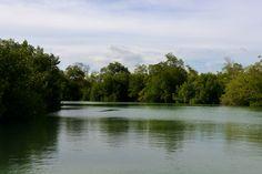Mouth of Black River, Portland Bight, Jamaica.