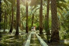 In the heart of Al Ain, near Al Ain National Museum, this impressive oasis is filled with palm plantations, many of which are still working farms.