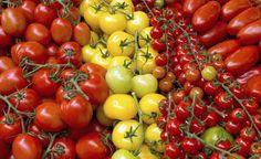 Tipps für eine reiche Tomatenernte