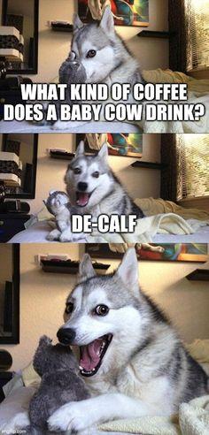 Pun Dog Meme, Bad Pun Dog, Funny Husky Meme, Puns Jokes, Dog Quotes Funny, Funny Animal Jokes, Funny Puns, Dog Memes, Cute Funny Animals