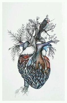 Anatomical Heart Art (this really isn't anatomically correct) Anatomical Heart Art (ce n'est vraiment pas anatomiquement correct) Kunst Tattoos, Medical Art, Anatomy Art, Heart Anatomy Drawing, Anatomy Tattoo, Art Plastique, Animal Tattoos, Art Inspo, Cool Art