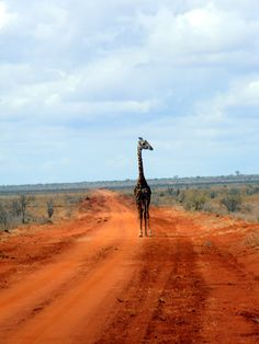Tsavo East Safari   - Explore the World with Travel Nerd Nici, one Country at a Time. http://TravelNerdNici.com
