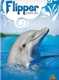 Flipper was a cute show in the 60's.  The man and his 2 sons,lived in FL.  He was a park ranger.  Flipper the dolphin,was their friend.