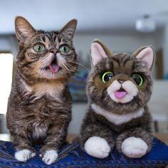 El peluche de Lil Bub