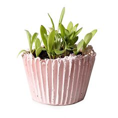 Look what I found at UncommonGoods: diy cupcake planter kit...
