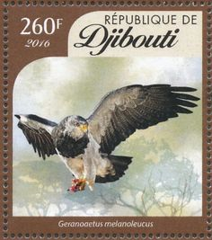 Black-chested Buzzard-Eagle stamps - mainly images - gallery format