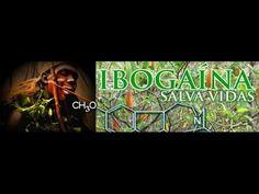 TRATAMENTO COM IBOGAINA, IBOGA TRATAMENTO,-, www.moringadapaz.com.br