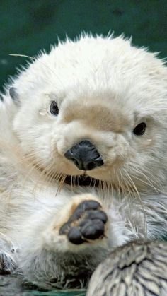 adorable otter