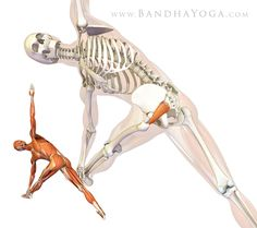I love this! This website is packed with all the geeky mechanics of why yoga is so great for you. Created by an Orthopedic Surgeon.