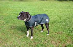 Kensington KD533PC-MDOX Dog Coat, Medium ** Trust me, this is great! Click the image. : Dog coats