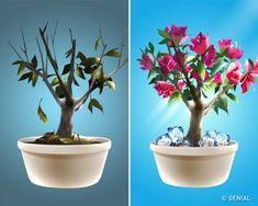 The Bonsai Workshop Ficus, Permaculture, Good To Know, Eco Friendly, Planter Pots, Plants, Workshop, Videos, Gardens
