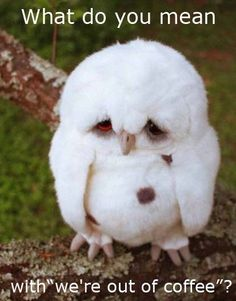 Funny pictures about Sad Baby Owl. Oh, and cool pics about Sad Baby Owl. Also, Sad Baby Owl. Funny Animal Quotes, Funny Animal Pictures, Baby Pictures, Funny Photos, Meme Pics, Animal Humor, Funny Sayings, What Do You Mean, Baby Owls