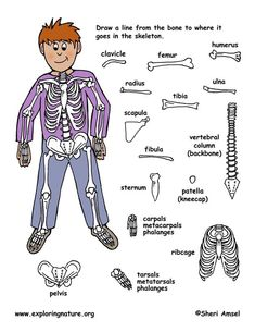 Where does this bone belong? Kid Science, Science Activities For Kids, Science Classroom, Science Lessons, Teaching Science, Science Education, Science Projects, Teaching Tools, Learning Activities