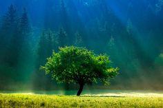 Light tree © Lubomír Schmida