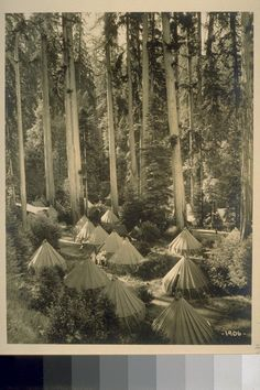 :: Tent City in the Bohemian Grove, 1906 ::