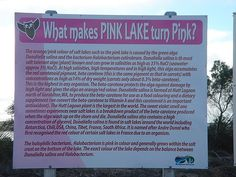 why pink lake is pink..
