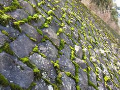 Oh how I love moss! Soft Life creeping into every nook and cranny...