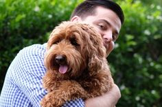 Why Does My Maltipoo Keep Peeing In The House (SOLUTIONS) Pet Urine, Pet Odors, Best Dog Food, Dry Dog Food, Maltipoo, Labradoodle, Training Tips, Dog Training, Goldendoodle Training