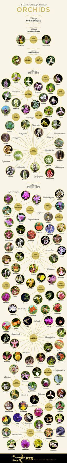 Types of Orchids by ftd #Infographic #Orchids