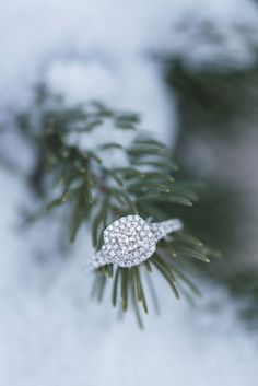 Gorgeous halo engagement ring sitting on pine tree in winter snow wedding snow At Home Winter Engagement Winter Engagement Pictures, Engagement Ring Photos, Fall Engagement, Engagement Couple, Wedding Pictures, Engagement Ring Photography, Christmas Engagement, Country Engagement, Engagement Dresses