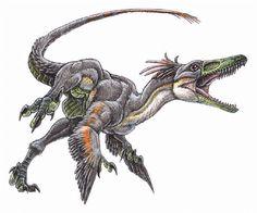 Bambiraptor feinbergorum - feathered dinosaur