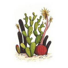magic cactus illustration print 5 by geffin refaeli via etsy Cactus Drawing, Cactus Art, Cactus Painting, Green Cactus, Cactus Decor, Illustration Cactus, Botanical Illustration, Cactus House Plants, Indoor Cactus