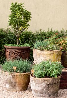 Herb Garden - containers of herbs Back Gardens, Small Gardens, Outdoor Gardens, Garden Urns, Garden Planters, Tuscan Garden, Herbs Garden, Container Plants, Container Gardening