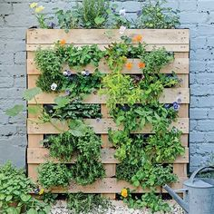 Upcycle an old pallet and turn it into a beautiful garden boasting with vegetables and herbs.