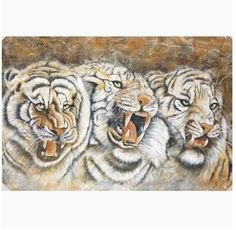 Angry Tigers - Direct Art Australia,  Price: $599.00,  Shipping: Free Shipping,  Size: 100 x 150cm Premium,  Framing: Framed (Gallery Wrap & Ready to Hang!),  Instock: Yes - immediate free delivery Australia wide!  http://www.directartaustralia.com.au/