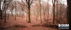 FOREST ELEMENTS-RED WOOD