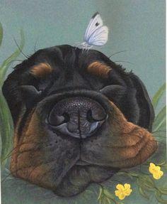 Rottweiler Pictures, Rottweiler Dog, Tibetan Terrier Breeders, Dog Paintings, Original Paintings, Cow Art, Sleeping Dogs, Fine Art Paper, Art Gallery