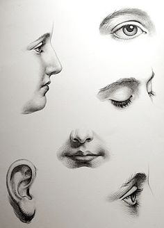 Interesting look into the details of the face. This engraving is from The Art of Figure Drawing by Thomas Herbert Maguire, published in 1869 by Winsor & Newton Pencil Art Drawings, Art Drawings Sketches, Realistic Drawings, Figure Drawings, Nose Drawing, Painting & Drawing, Anatomy Sketches, Drawing Practice, Drawing Techniques