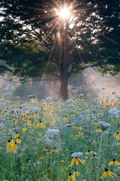 Summer sunrise in the meadow Beautiful World, Beautiful Places, Beautiful Pictures, Terre Nature, Dame Nature, Garden Paths, Brick Garden, Garden Bed, Land Scape