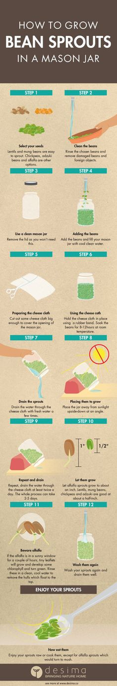 Follow these easy steps to grow different types of bean sprouts at home.  Use them in salads and stir fries. Mason jars are great for this, but you  can use almost any glass jar.  How to grow bean sprouts in a mason jar infographic  Remember if you use this infographic on your website, you must have a link  back to this page and our home page www.desima.co   Featured Nov 24, 2016 Gardening gardening, infographic, DIY, tips and  tricks Kirk Dyer Comment Nov 24, 2016 Gardening gardening…