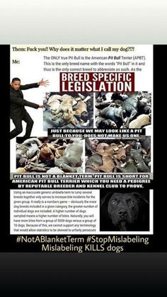 Stop Animal Cruelty, American Pit, Pitbull Terrier, Animal Rights, Pit Bull, Dogs, Animals, Pet Dogs, Pitbull