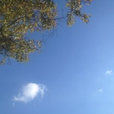 Afternoon sky #sky #afternoon #cloud #tree #nature