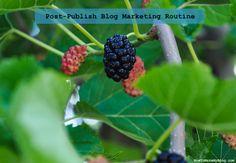 My Post-Publish Blog Marketing Routine http://www.howtomakemyblog.com/marketing/post-publish-routine/