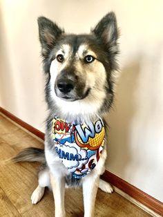 Waterproof bandanas for sale! Dog Coats, Bandanas, Dog Accessories, Your Dog, Husky, Etsy Seller, My Etsy Shop, Dogs, Animals