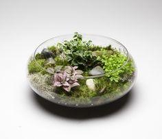 """10"""" moss garden"""