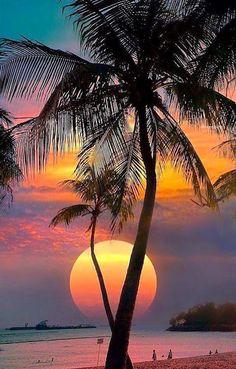 Wonderful Places: Sentosa Island - Singapore ✨🌴🌴🌴✨ Picture by ✨✨ . for a feature . Beautiful Moon, Beautiful Sunrise, Beautiful Beaches, Sentosa Island Singapore, Sunset Beach, Beach Sunsets, Palm Tree Sunset, Hawaiian Sunset, Palm Trees Beach