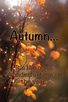 Autumn Cozy, Autumn Forest, Autumn Scenes, Nature Aesthetic, Love Wallpaper, New Year 2020, Hello Autumn, Good Thoughts, Autumn Inspiration